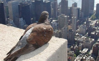 pigeon on skyscraper